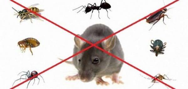 مكافحة الحشرات بحائل